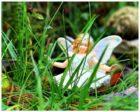 Elfen – wundervolle Fabelwesen und der Zauber des Glaubens