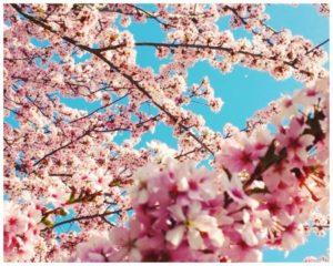 Frühjahrsmüdigkeit – das hilft dagegen